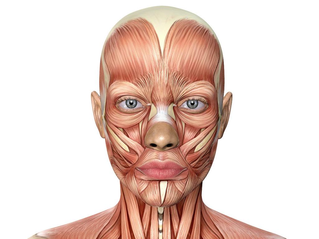 Gesichtsmuskeltraining für Muskelaufbau im Gesicht
